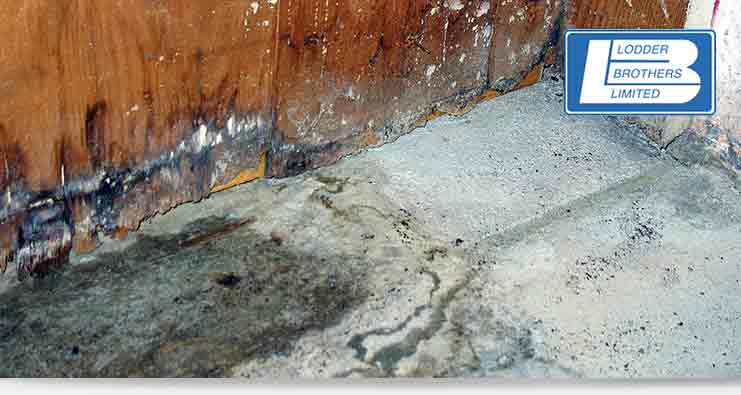 water leak detection service in Guelph, Waterloo and Kitchener, ON